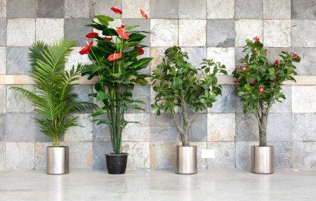 Photo pour Quatre plantes en pot contre le mur de Pierre - image libre de droit