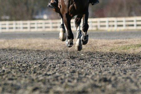 Galloping horse close up