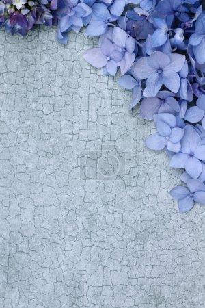 Foto de Hortensias sobre un fondo de grietas con espacio para espacio de copia. - Imagen libre de derechos