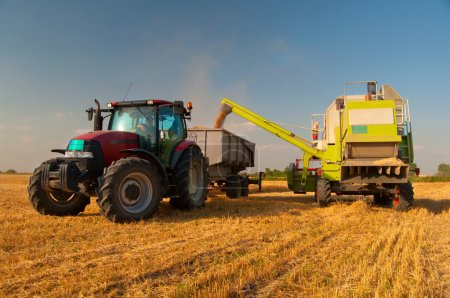 Modern combine harvester unloading grain into the tractor on sunny summer day.