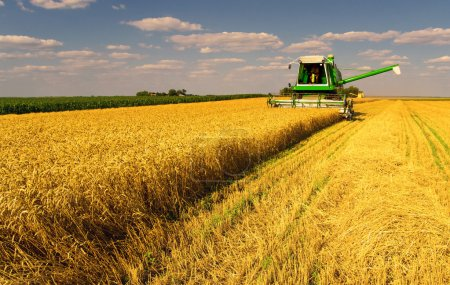 Photo for Combine harvester harvesting wheat on sunny summer day. - Royalty Free Image