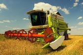 Kombajn pracuje na poli pšenice