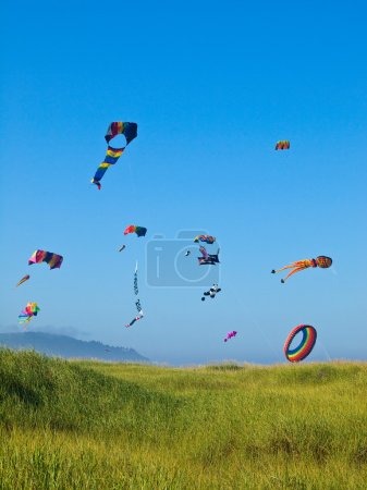 Various Colorful Kites Flying in a Bright Blue Sky