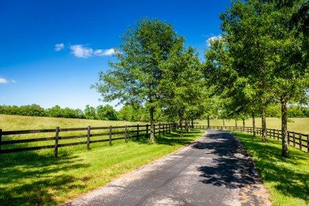 Foto de Carretera entre granjas de caballos en kentucky rural - Imagen libre de derechos