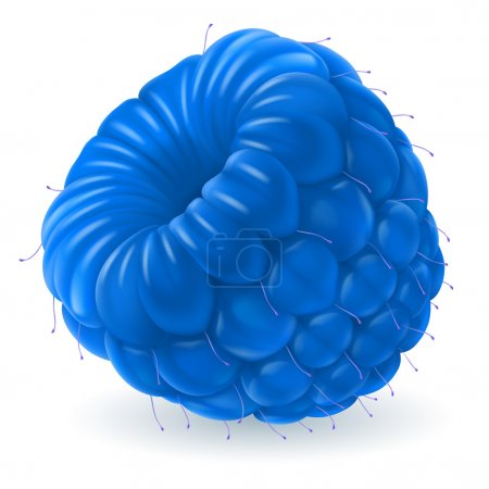 Illustration for Shiny blue raspberry isolated on white background. Realistic llustration - Royalty Free Image