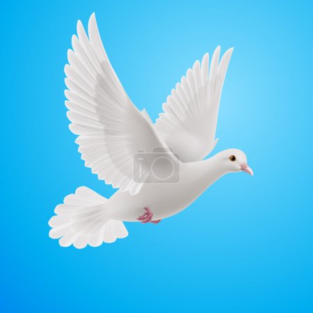 Illustration for Realistic white dove on blue background. Symbol of peace - Royalty Free Image