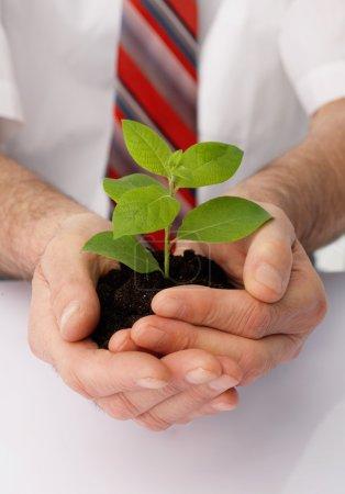 Photo pour Gros plan des mains d'un homme d'affaires tasse une plante verte. - image libre de droit