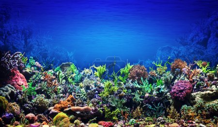 Photo for Coral Reef - Royalty Free Image
