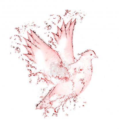 Dove made out of wine splashes