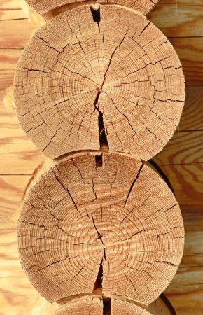 Close-up wooden cut