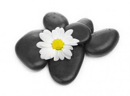 Zen basalt stones and daisy