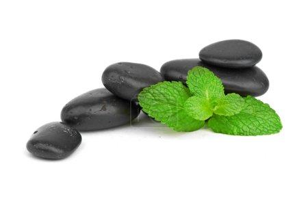 Mint on the black stones