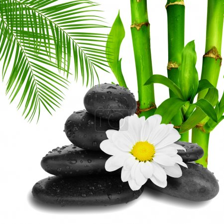 Camomile flower ,black stones and bamboo