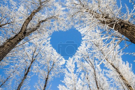 Photo for Winter landscape,branches form a heart-shaped pattern - Royalty Free Image