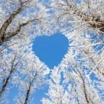 Winter landscape,branches form a heart-shaped patt...