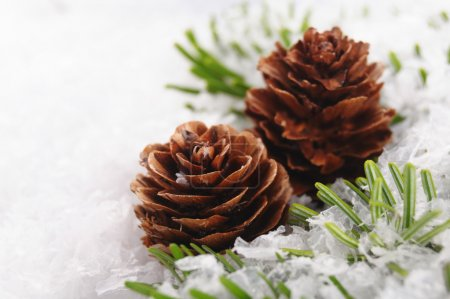 Photo for Christmas background of branch with cone - Royalty Free Image