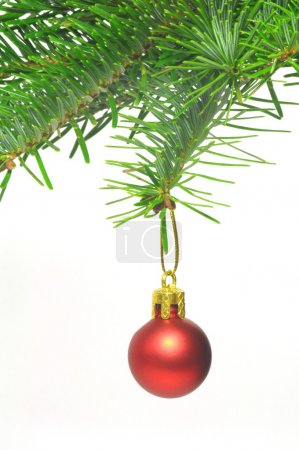 Christmas branch with ball