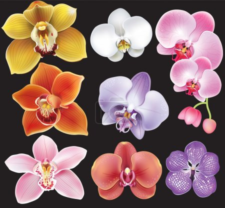 Illustration for Collection of orchid flower - Royalty Free Image