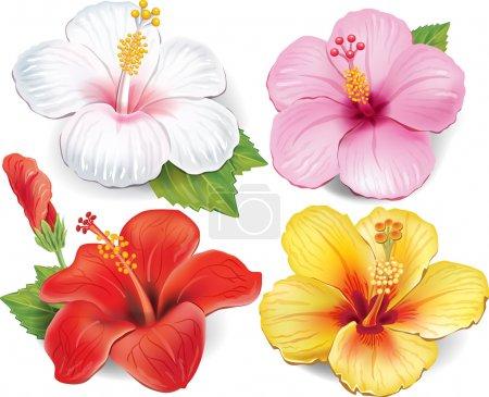 Illustration pour Ensemble d'hibiscus - image libre de droit