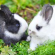 Funny baby rabbits in grass...