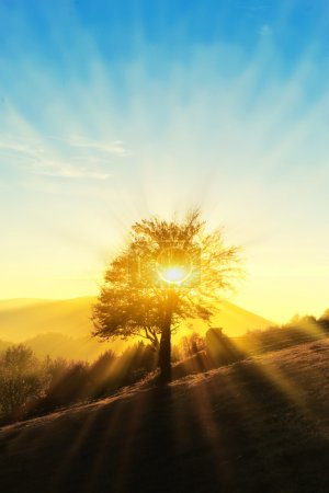 Photo pour Paysage d'automne avec forêt colorée - image libre de droit