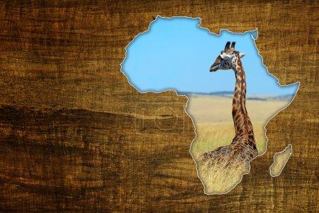 Africa Wildlife Map Design