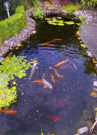 fish in a pond
