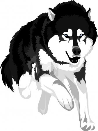 Dog breed malamute