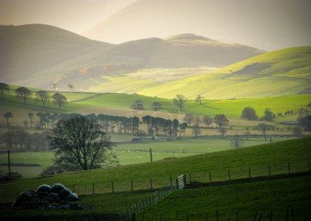 Photo pour Faible soleil d'hiver sur les collines rurales dans les frontières écossaises - image libre de droit