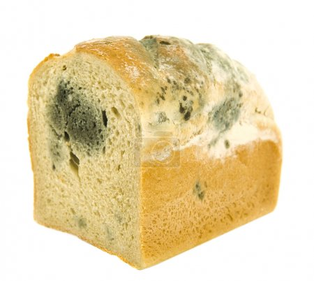 Moldy bread. Isolated on white....