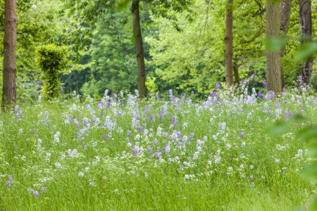 blossom meadow in forest