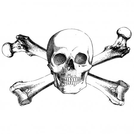 Vector Vintage Skull and Cross Bones