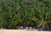 Tall palm trees on the beach in Koh Samui