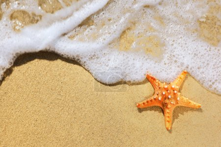 Starfish on sand beach