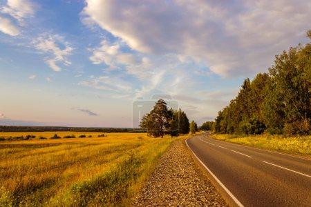 Photo pour Asphalt road passing by the forest in the evening - image libre de droit
