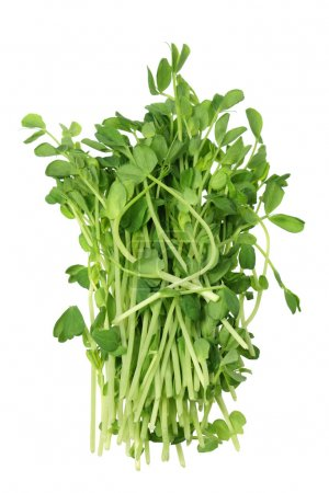 Photo for Snow Pea Sprouts on White Background - Royalty Free Image
