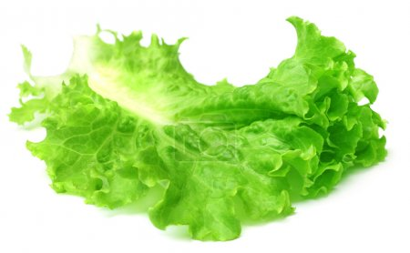 Photo for Fresh lettuce over white background - Royalty Free Image