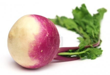 Raw Turnip