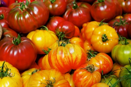 Photo for Pile of red, orange, green and yellow Heritage Tomatoes at the farmers market - Royalty Free Image