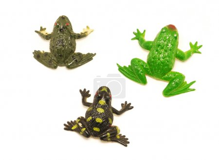 Frogs on a white background