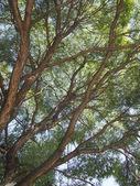 """Постер, картина, фотообои """"ствол дерева"""""""