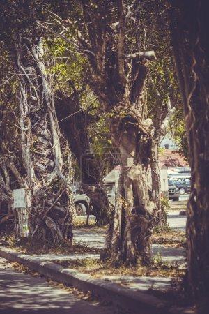 Nahaufnahme von Banyan-Baumstammwurzeln mit Schnitzereien in Retro-Farben