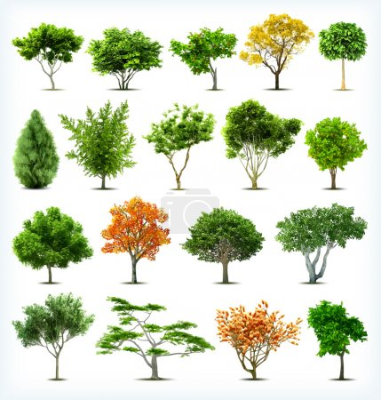 Illustration for Set of trees isolated on white background. Vector - Royalty Free Image