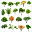 Set of trees isolated on white background. Vector...