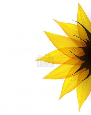 Illustration for Sunflower part. Vector illustration eps10 - Royalty Free Image