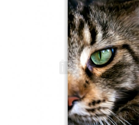 Close up half  face of Maine Coon cat. Vector
