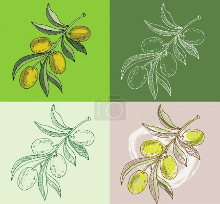 Photo for Illustration - hand drawn olive branches - Royalty Free Image