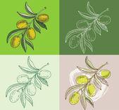 """Постер, картина, фотообои """"Иллюстрация - рисованной оливковых ветвей"""""""