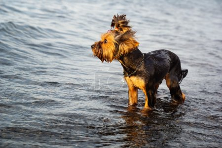 Small dog in the water