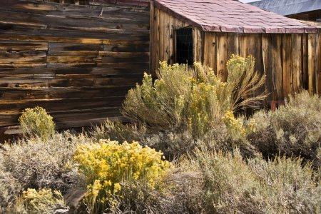 Photo for Authentic western building and high desert shrubs at agold mining ghost town - Royalty Free Image
